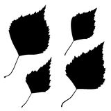 Reeks van het vector zwarte overzicht van berkbladeren Stock Foto