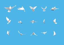 Reeks van het witte duiven vliegen geïsoleerdi op blauw Royalty-vrije Stock Afbeeldingen