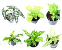 Reeks van houseplant in potten Royalty-vrije Stock Fotografie