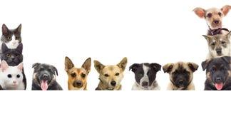 Reeks van huisdier het letten op Royalty-vrije Stock Foto's