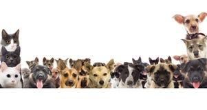 Reeks van huisdier het letten op Royalty-vrije Stock Foto