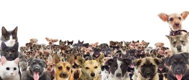 Reeks van huisdier het letten op Royalty-vrije Stock Afbeeldingen