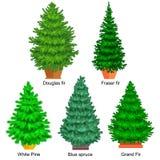Reeks van ingemaakte Kerstmis vectorboom zoals spar of pijnboom Blauwe sparren voor Nieuwe jaarviering zonder vakantiedecoratie stock illustratie