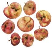 Reeks van kromme, lelijke, zieke, ongezonde appelen royalty-vrije stock afbeelding