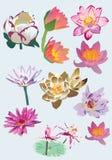 Reeks van lotusbloem Royalty-vrije Stock Foto's