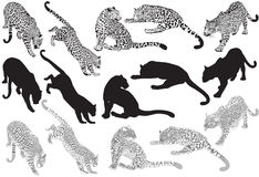 Reeks van luipaard op een witte achtergrond Royalty-vrije Stock Foto