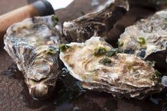 Reeks van oester stock fotografie