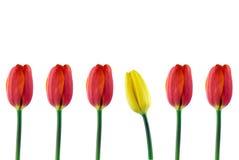 Reeks van rode tulpen en een gele tulp stock foto