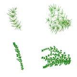 Reeks van Rosemary en thyme in realistische stijl Royalty-vrije Stock Afbeelding