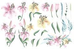 Reeks van roze en gele lelie met bladeren Vector royalty-vrije stock foto's