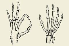 Reeks van Skelethand royalty-vrije illustratie