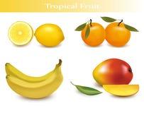 Reeks van tropisch fruit. royalty-vrije illustratie