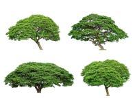 Reeks van tropische boom Stock Fotografie