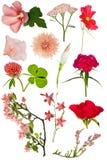 Reeks van twaalf rode kleurenbloemen op wit Stock Foto