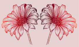 Reeks van twee chrysantenbloemen Royalty-vrije Stock Foto