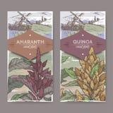 Reeks van twee etiketten met Amaranthus de amarant en het Chenopodium van cruentusaka - quinoa kleurenschets De inzameling van gr Stock Foto's
