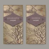 Reeks van twee etiketten met Amaranthus de amarant en het Chenopodium van cruentusaka - quinoa schets De inzameling van graangewa Royalty-vrije Stock Fotografie