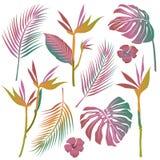 Reeks van vector van tropische bloemen, bladeren Stock Foto's