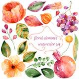 Reeks van verschillende rode, purpere bloemen en granaatappel voor uw eigen ontwerp vector illustratie