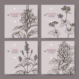Reeks van vier banners met amarant, quinoa, chia en boekweitschets De inzameling van graangewasseninstallaties Royalty-vrije Stock Afbeeldingen
