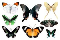 Reeks van vlinder acht op witte achtergrond met het knippen van weg vector illustratie
