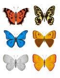 Reeks van Vlinder, VectorIllustratie. Royalty-vrije Stock Afbeeldingen
