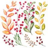 Reeks van 8 waterverftakken met bladeren en bessen voor de herfstontwerp stock illustratie
