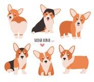 Reeks van Welse corgi in verschillende houdingen Kleine leuke die hond van het hoeden van ras op witte achtergrond wordt geïsolee royalty-vrije illustratie