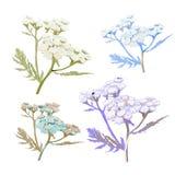 Reeks van wilde bloem Royalty-vrije Stock Foto