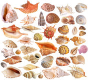 Reeks van zeeschelpinzameling stock foto