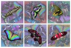 Reeks van zes onderleggers voor glazen van vlinderdranken Royalty-vrije Stock Foto