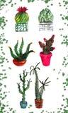 Reeks van zes potten van de waterverfcactus stock illustratie
