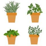 Reeks vector culinaire kruiden in potten met vers thymebasilicum, ros Royalty-vrije Stock Foto's