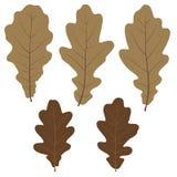 Reeks vector eiken bladeren voor uw ontwerp Stock Fotografie
