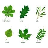 Reeks vector groene bladeren op witte achtergrond Stock Foto's