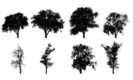 Reeks vector realistische silhouetten van loofbomen Stock Foto