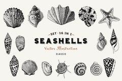 Reeks vector uitstekende zeeschelpen Negen zwarte illustraties van shells Stock Fotografie