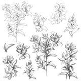 Reeks vectorcontourbloemen op een witte achtergrond Schetsen van de ge?soleerde bloemen die door inkt worden getrokken Contour Cl vector illustratie
