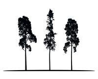 Reeks vectorsilhouetten van hoge naaldbomen Royalty-vrije Stock Foto
