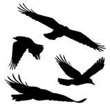 Reeks vectorsilhouetten van vliegende vogels royalty-vrije illustratie
