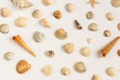 Reeks veelvoudige die zeeschelpen over de witte achtergrond wordt geïsoleerd Stock Foto
