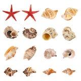 Reeks veelvoudige overzeese geïsoleerd shells Stock Foto's