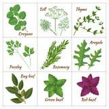 Reeks verschillende culinaire kruiden of geneeskrachtige, curatieve aromatische kruiden en kruiden Stock Foto's