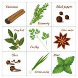 Reeks verschillende culinaire kruiden of geneeskrachtige, curatieve aromatische kruiden en kruiden Royalty-vrije Stock Foto