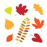 Reeks verschillende de herfstbladeren Stock Foto's
