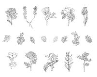 Reeks verschillende installaties - de wildernis, bessen, nam, chrysant en papaver met bladeren toe royalty-vrije stock fotografie