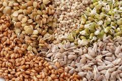 Reeks verschillende ontsproten zaden voor het gezonde eten als achtergrond stock foto