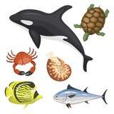 Reeks verschillende soorten van de overzeese van het het karakterwild dierenillustratie de tropische mariene aquatische vissen stock illustratie