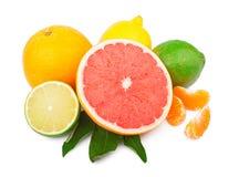Reeks citrusvruchten royalty-vrije stock afbeelding