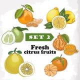 Reeks 2 Verse citrusvruchten van citroen, mineola, clementine, pompelmoes, bergamot en mandarin Royalty-vrije Stock Afbeeldingen